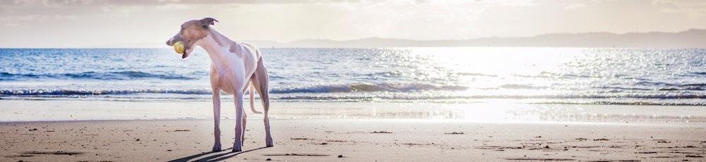 Strandvakantie met hond