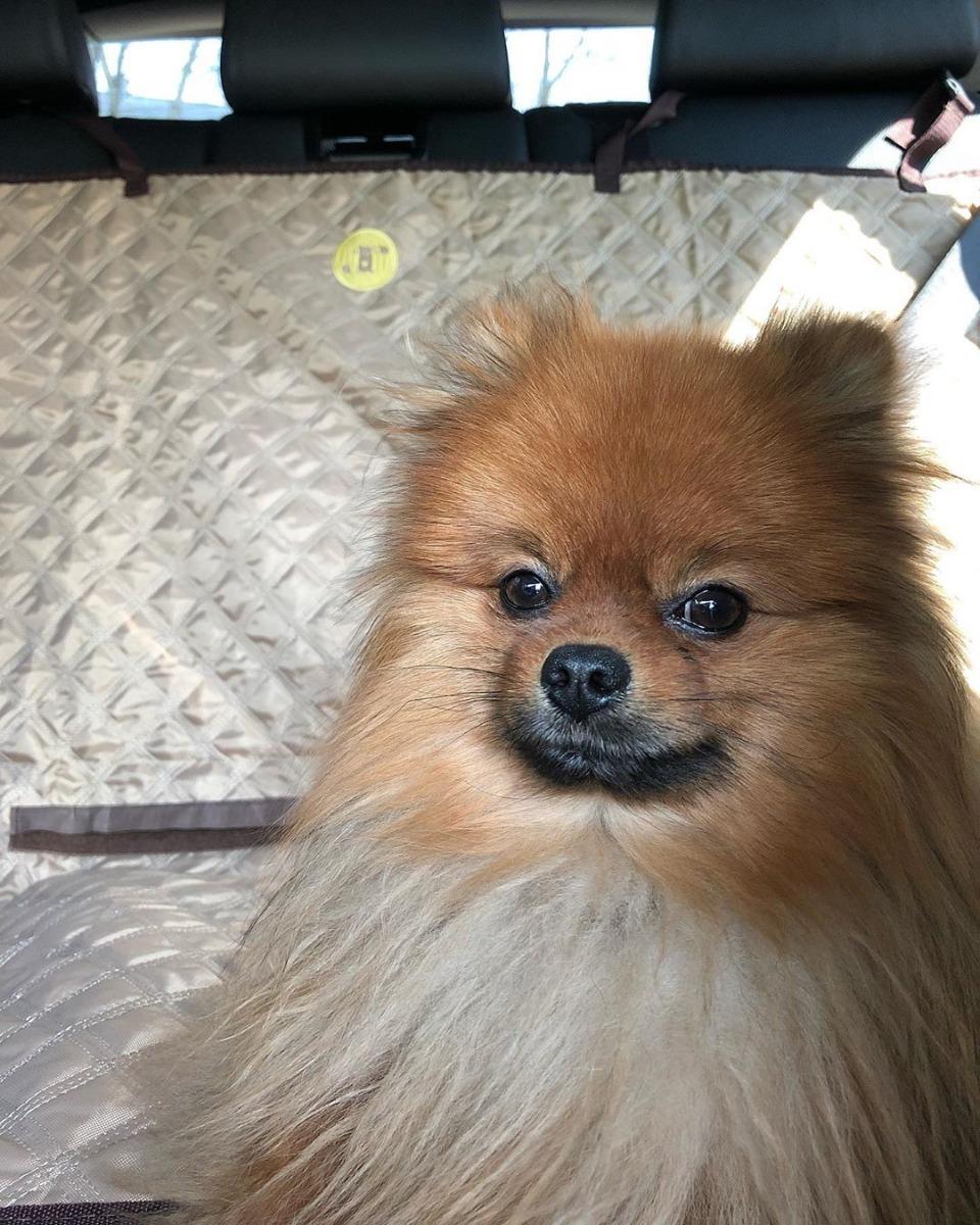 Hondenkleed auto
