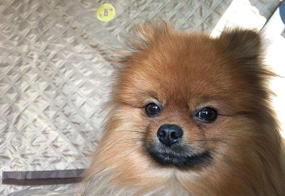 Hond in auto veiligheid